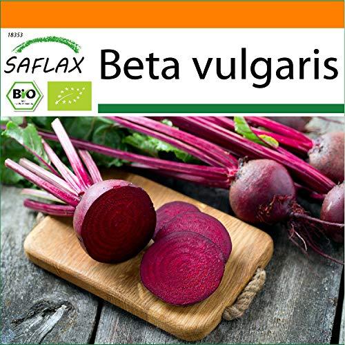 SAFLAX - - Ecológico - Remolacha - Globo de Detroit - 100 semillas - Beta vulgaris