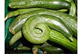 Snake Gourd 10 Seeds RARE Vine or ground cover Annual Trellis Gardening Trichosanthes cucumerina anguina