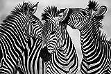 VCFHU Zebra Canvas Art Pintura Animal Wall Art Posters En Blanco Y Negro Impresiones Modernas para La Salon De Estar Hogar Decoracion De La Pared Interior Cuadros 60x80cm Sin Marco