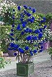 Ponak nuevas 100 PC rosal trepador semillas de flores para jardinería azul 2