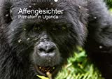 Affengesichter - Primaten in Uganda (Wandkalender 2021 DIN A2 quer)