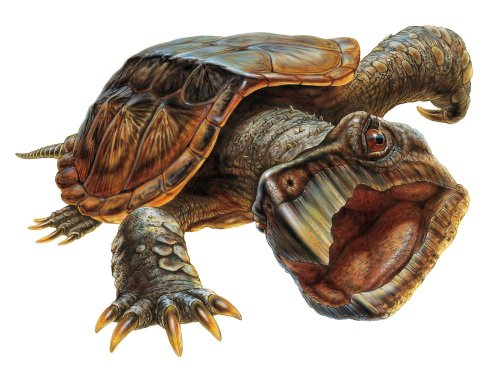 Snapping Turtle Wall Decal by Wallmonkeys Peel and Stick Graphic (30 in W x 23 in H) WM276720