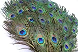 Garvest Natural Peacock Feathers  10 to 12-Inch Eyed Peacock Tail Feathers  DIY Craft Decoration for Weddings, Halloween, Anniversaries, Christmas, Holidays, Costumes  Set of 50 Peacock Feathers
