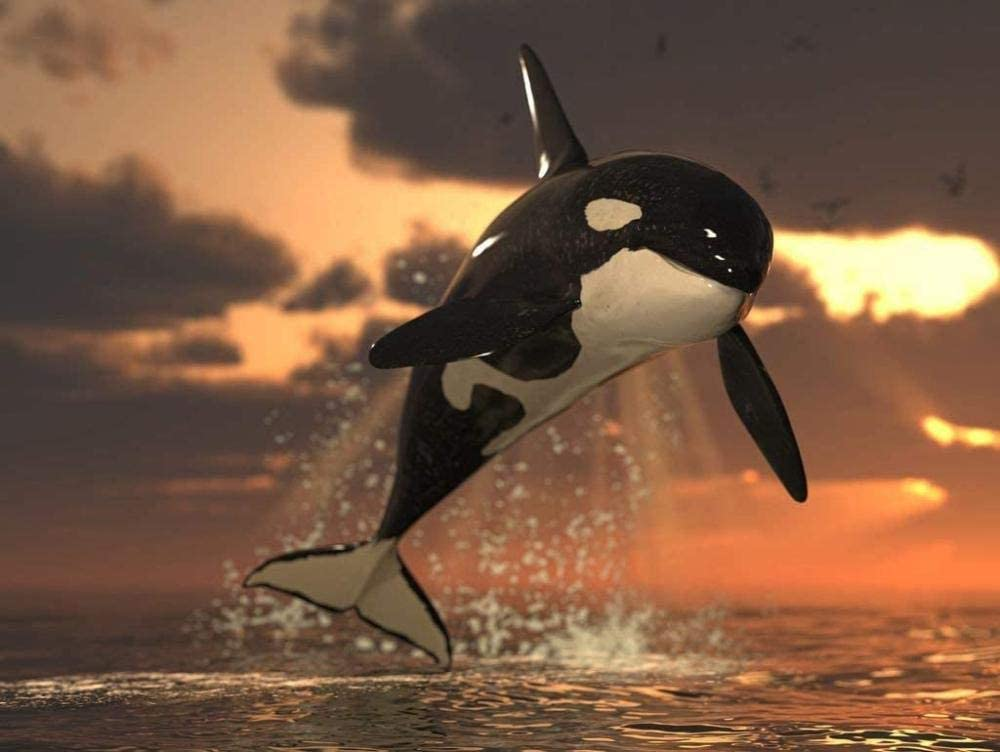 XiuTaiLtd Jigsaw Puzzle Orca 1000 Pieces 最新号掲載アイテム 激安 激安特価 送料無料 Friends 75X50Cm for