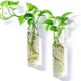 Kingbuy Wall Hanging Planter Glass Plant Propagation Station for Home Decor, Large Cylinder, 2 Pack