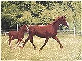 CB Home % Style Tierdecke XL 150 x 200 cm Kuscheldecke Decke (Pferde)