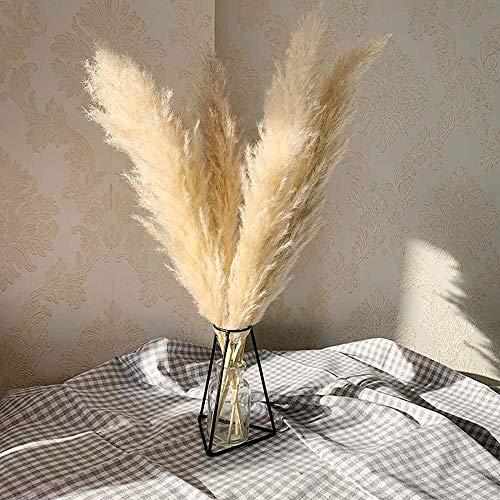 6/8/12 Tallos mullidos Reed Pampas GrassNatural seco Pampas Grass Artificial 50cm Boho Decoración para el hogar Phragmites Naturales Flores secas (8 Tallos)
