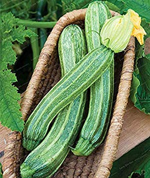 . 10 Stück Honig-Kürbis seltenen Obst- und Gemüse Süßen Pflanzen für DIY Hausgarten-Anlagen: 3