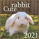 rabbit cute: 2021 Monthly Square Wall Calendar, Domestic Animals Small Pets