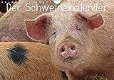 Der Schweinekalender (Wandkalender 2020 DIN A4 quer): Glückliche Schweine in artgerechter Haltung, sowohl verschiedene alte Hausschweinrassen als auch ... (Monatskalender, 14 Seiten ) (CALVENDO Tiere)