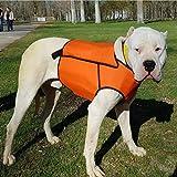 Chaleco protección para Perro de Caza jabalí Fabricado en Material Multicapa Muy Resistente Talla M Macho
