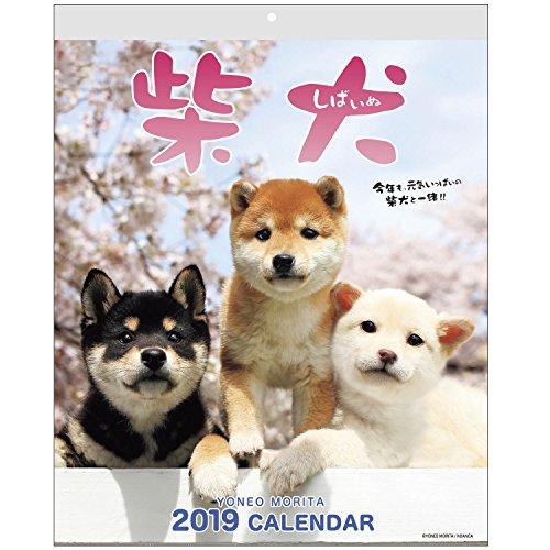 アクティブコーポレーション 2019年 犬 柴犬 カレンダー 壁掛け 森田米雄 まるごと柴犬 ACL-11 (2019年 1月始まり)