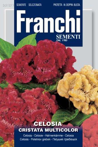Seeds of Italy Ltd Franchi Graines d'amarante crête de Coq Multicolore