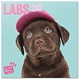 Erik Wandkalender Studio Pets Hund Labrador- Kalender 2021 für 16 Monate