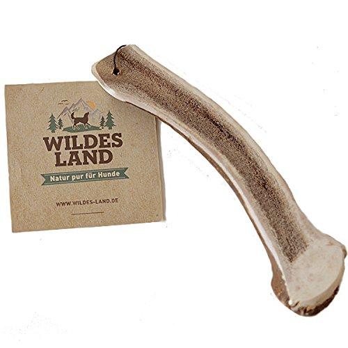Wildes Land | Hirschgeweih Halb | L | Natürlich abgeworfenes Geweih | Reines Naturprodukt ohne Zusätze | Geruchslos, splittert Nicht | Unterstützt die Zahnreinigung | Geweihkausnack