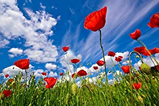 Best poppy field photography Reviews