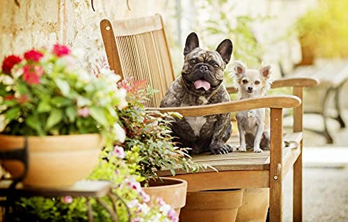 LHJOY Toddler Puzzle 1000 Piece Dog Chihuahua French Bulldog