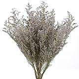 XHXSTORE 6pcs Ramo de Flores Secas Naturales Flores Seca Eucalipto y Craspedia secas para San Valentín Jarrones Hogar Bodas Fiestas Mesa arreglo Floral Manualidades