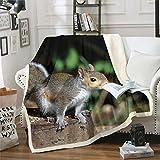 Feelyou Kids Throw Blanket Boys Girls Squirrel Sherpa Blanket Cute Wild Animal Fleece Blanket Lovely Wildlife Decor Fuzzy Blanket for Bed Chair Sofa Couch Super Soft Plush Fuzzy BlanketThrow 50'x60'