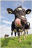 Wallario Poster - Lustige Kuh auf der Weide mit