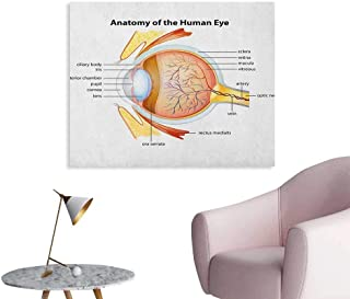 Anzhutwelve Educational Photo Wall Paper Human Eye Anatomy Cornea Iris Pupils Optic Nerves Graphic Print Poster Print Coral Mustard Baby Blue W36 xL32