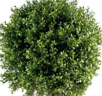 Plante artificielle convient en exterieur Buis tige boule - hauteur : 110 cm