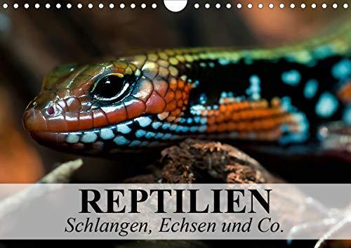 Reptilien Schlangen, Echsen und Co. (Wandkalender 2021 DIN A4 quer)