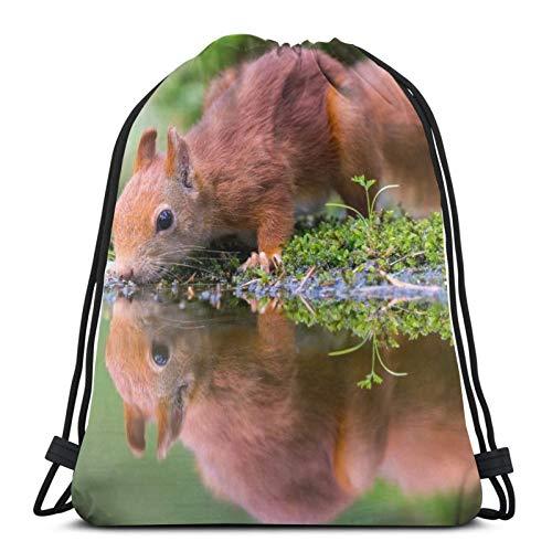 Animal Nager Tier Eichhörnchen N...