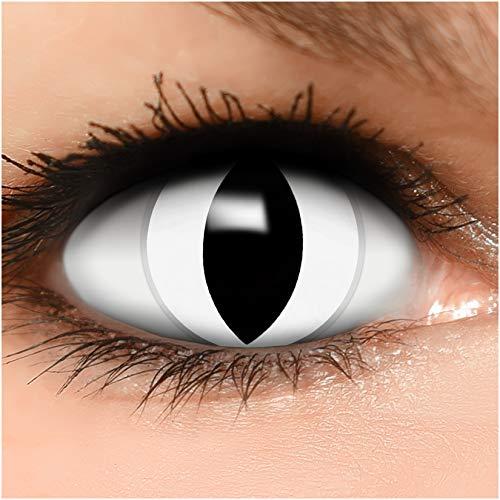 Farbige Kontaktlinsen Weiße Katze in weiß + Behälter - Top Linsenfinder Markenqualität, 1Paar (2 Stück)