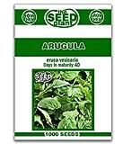 Arugula Seeds - 1000 Seeds Non-GMO