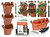 Bloem, Terra Cotta Hanging Garden Planter System 3 Pack, (482121-1001)