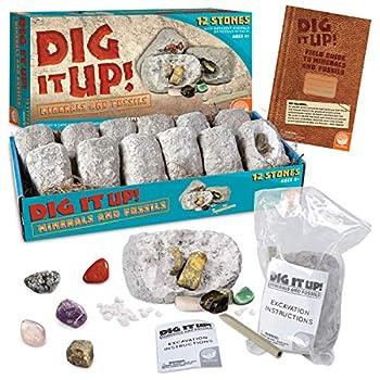 Dig It Up! Fossils & Minerals