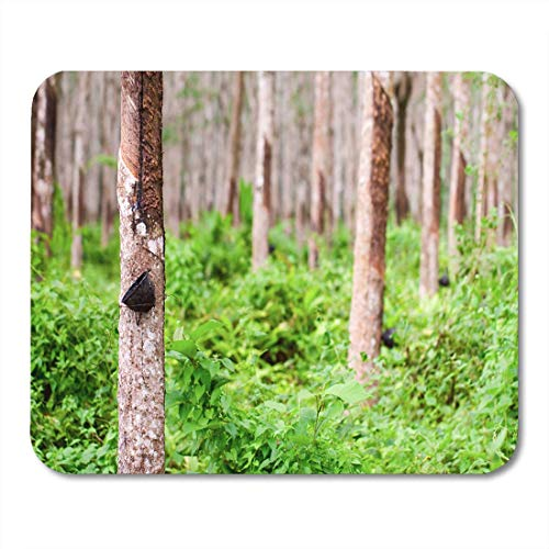 Mauspads Green Agriculture Tapping Latex von Rubber Tree Phuket Thailand Mouse Pad für Notebooks, Desktop-Computer Matten Büromaterial