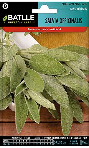 Semi di erba di Batlle - sage officinalis (semi - 25-35cm)
