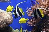Mauspad, Aquarium, Fische, Unterwasser - Sea, Mousepad, Fellowes 5909301
