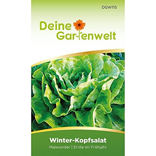 Winter-Kopfsalat Maiwunder Samen - Lactuca sativa - Winter-Kopfsalatsamen - Gemüsesamen - Saatgut für 500 Pflanzen