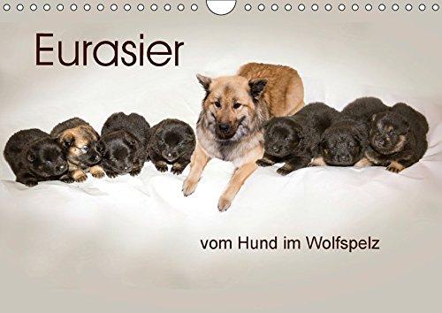 Eurasier, der Hund im Wolfspelz (Wandkalender 2018 DIN A4 quer): Bilder aus dem Zwinger