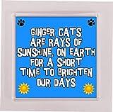 Untersetzer Ingwer Katze - Sonnenstrahlen auf Erde für kurze Zeit - Neuheit Tasse/Tasse Ideales Geschenk