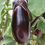 100 Unids/Bolsa Semillas De Berenjena Frescas No Transgénicas Púrpura Oscuro Nutrición Rica Plántulas Vegetales Para Plantas De Jardín Semillas De Jardín Semillas de berenjena