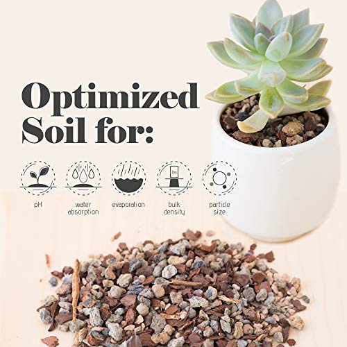 Bonsai Jack Succulent Soil Gritty Mix #111