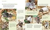Ratten: So fühlen sich die Kletterkünstler rundum wohl (GU Tierratgeber) - 4