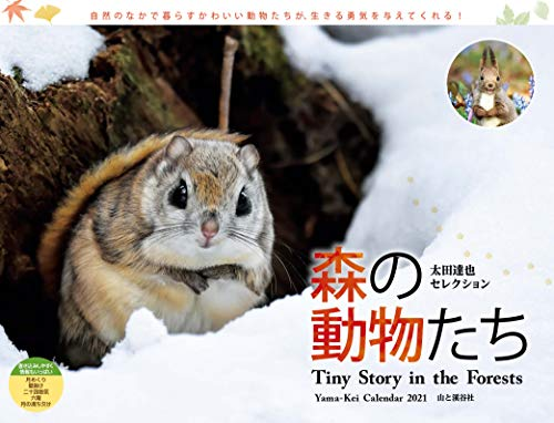 カレンダー2021 太田達也セレクション 森の動物たち Tiny Story in the Forests(月めくり・壁掛け) (ヤマケイカレンダー2021)の詳細を見る