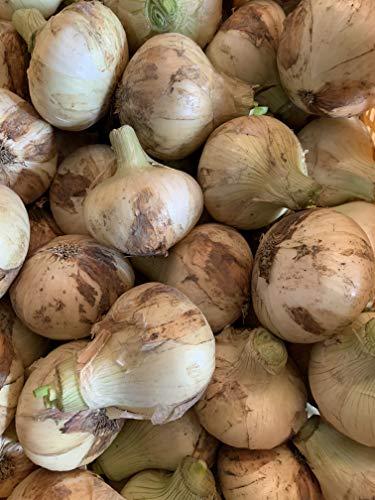 名手農園 淡路島産 たまねぎ 新玉ねぎ 2021年産 2.5kg 期間限定価格で販売中!