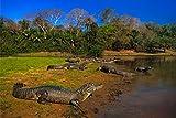 Aligator Krokodil Tier XXL Wandbild Kunstdruck Foto