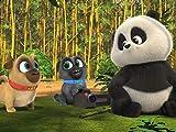 Puppies and Pandas / Orange You Glad?