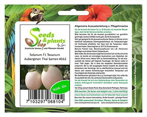 Stk - 10x Solanum F1 Texanum Auberginen Thai Gemüse Pflanzen - Samen #162 - Seeds Plants Shop Samenbank Pfullingen Patrik Ipsa