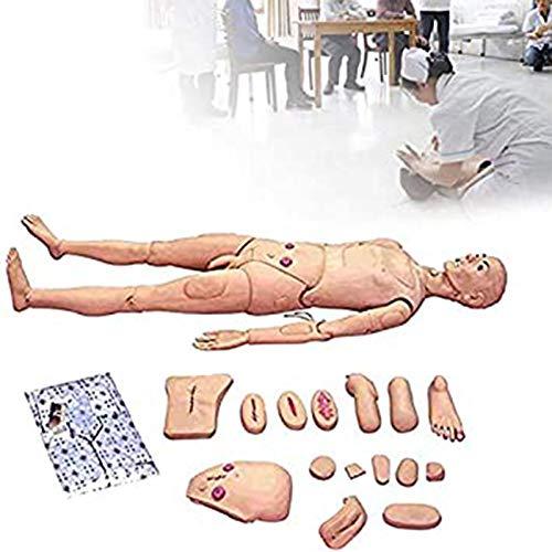 MWY Suministros de examen médico y consumibles suministros de educación de ciencia de enfermería médica Maniquí de capacitación para demostración humana