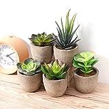 Yardwe 5 Stücke Künstliche Sukkulenten kunstpflanze mit Töpfen Tischdeko Hausgarten Deko - 4