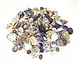 100 g kleine Muscheln Muschel für Bastel- und Display, 1,5 cm - 3,0 cm