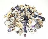 100 G de conchas marinas Mix 1 tamaño pequeño, de conchas marinas para Manualidades pantalla y
